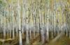 Birch Forest~Autumn